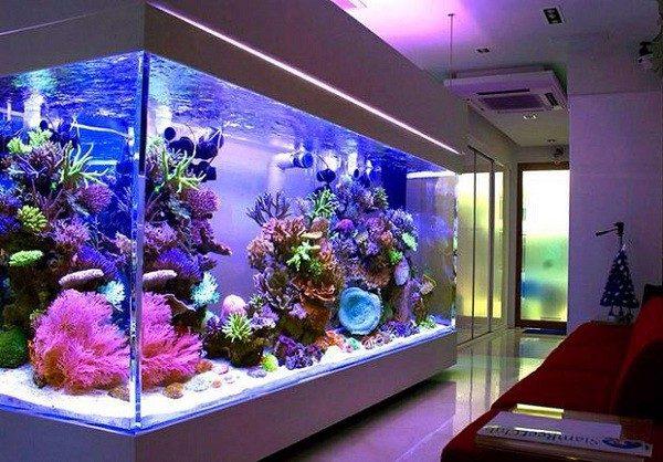 Đèn âm nước giúp cho bể cá sinh động hơn
