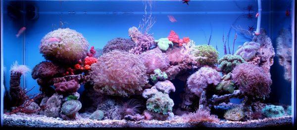 Đèn led dưới nước 3w được lắp đặt trong bể cá thủy sinh