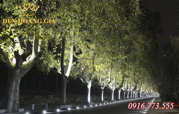 Bố trí đèn chiếu sáng trên các tán cây