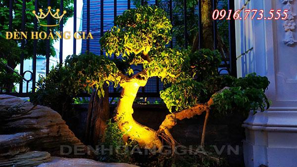 Vì sao nên lắp đèn chiếu sáng gốc cây?